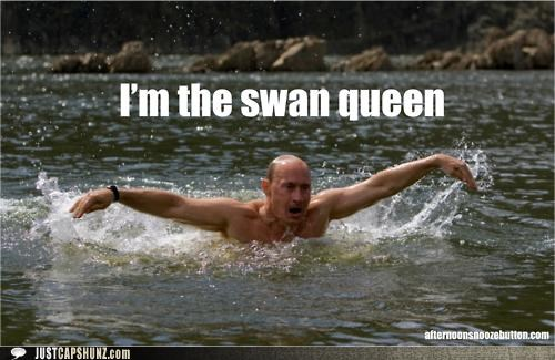 black swan epic politicians Pundit Kitchen russia swan queen swimming Vladimir Putin - 5203075328