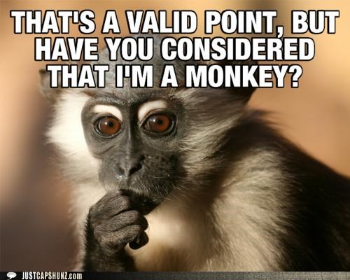 animals argument I Can Has Cheezburger monkeys thinking thoughtful valid - 5203262720