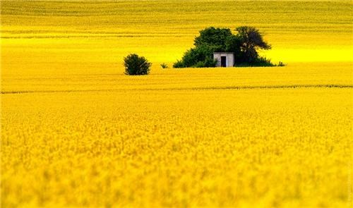 Fields of Gold getaways gold unknown location user submitted yellow - 5203487488