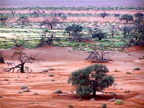 africa,desert,getaways,green,namib desert,Namibia,tan,trees,west africa