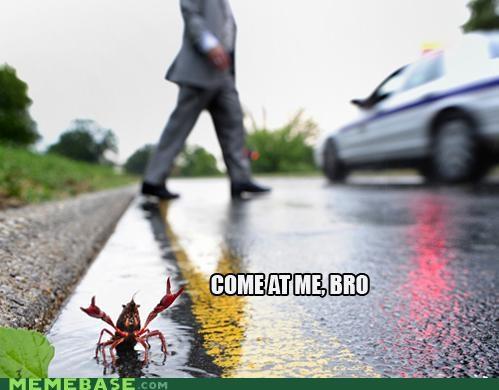 bro come at me IRL Memes shrimp - 5203552768