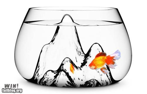aquarium design fish fish bowl fish tank glass pet pets