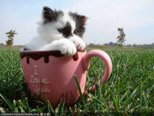 coffee,cups,cyoot kitteh of teh day,grass,i love you,mugs,outside