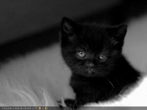 basement cat black and white black cats cyoot kitteh of teh day emo Sad - 5203756288