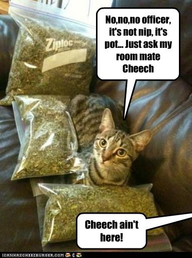 ask,caption,captioned,cat,cheech,Cheech and Chong,explanation,nip,no,not,officer,police,pot,roommate