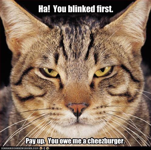 Cheezburger Image 5204051456