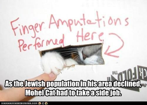 caption captioned cat circumcision declined jewish job lolwut population second sign