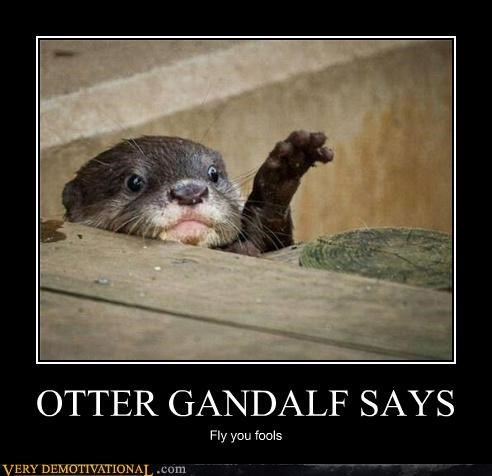 animals,fly,gandalf,otter,Pure Awesome