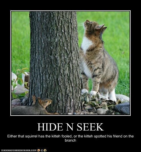 HIDE N SEEK Either that squirrel has the kitteh fooled, or the kitteh spotted his friend on the branch