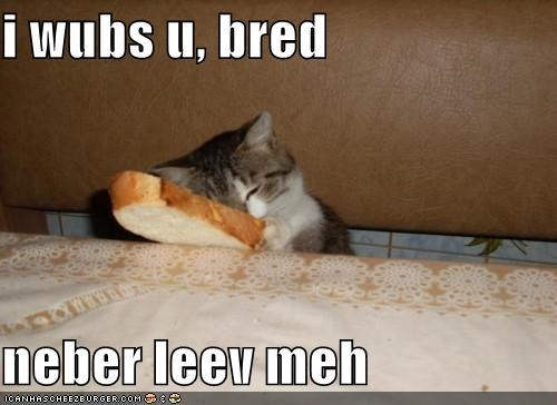 bread,caption,captioned,cat,cuddling,holding,i love you,leave,love,never,request