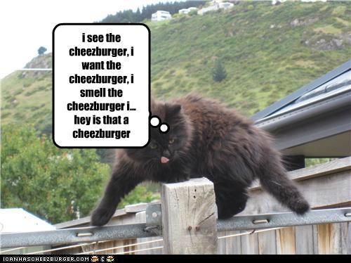Cheezburger Image 5204838144