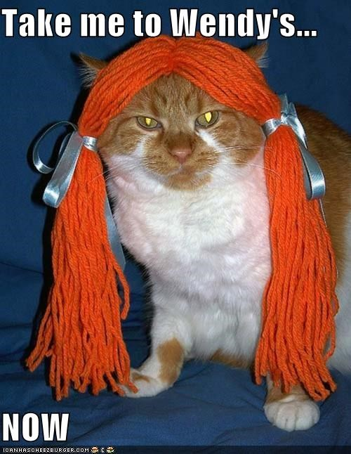 animals Cats cheezburgers commands dressed up food I Can Has Cheezburger wendys wigs