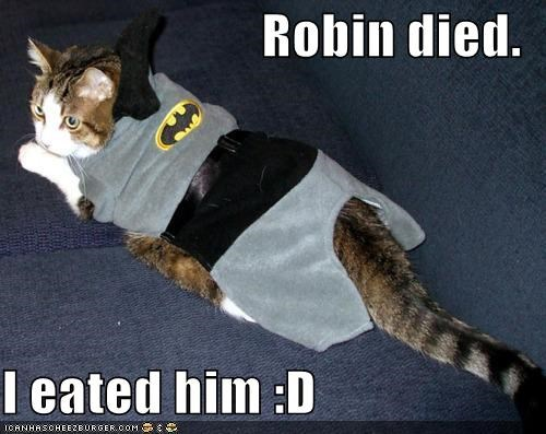 animals,batman,Cats,costume,eated it,I Can Has Cheezburger,robin