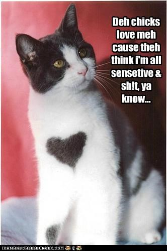 animals,Cats,chicks,fur,hearts,I Can Has Cheezburger,love,sensitive,sweet