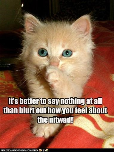 advice alternative better blurt caption captioned cat feel feelings idiot kitten nothing say tell TO - 5205336576