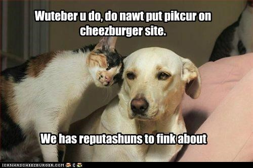 Cheezburger Image 5205522432