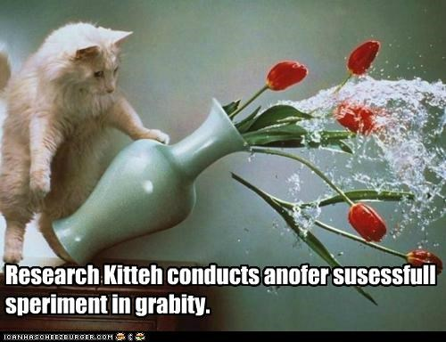 accident,another,caption,captioned,cat,conducts,disaster,experiment,Gravity,mess,research,successful,tabby,vase