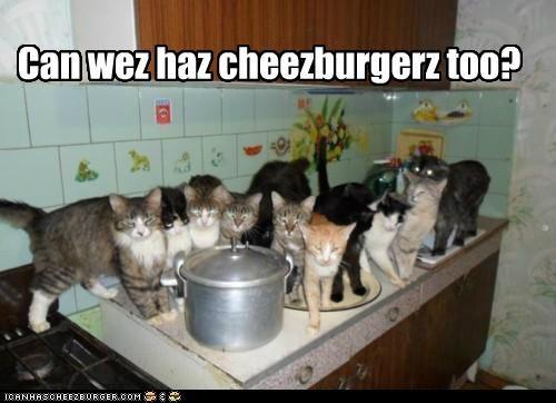 Cheezburger Image 5206034176