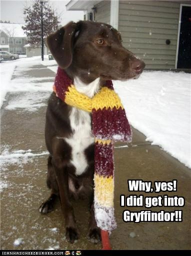 clothes clothing gryffindor Harry Potter Hogwarts mixed breed outside scarf snow whatbreed