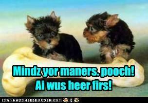 Cheezburger Image 5206298368