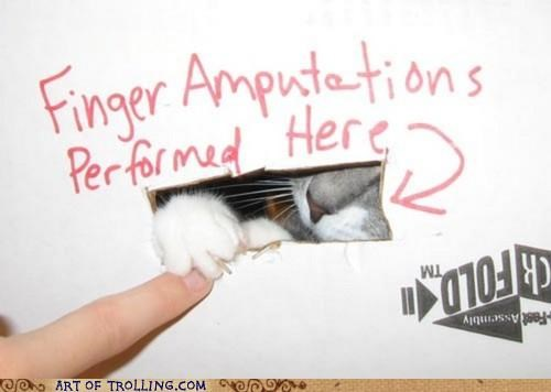 amputation,cat,IRL,kitty