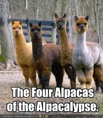 alpacalypse,alpacas,animals,apocalypse,four horsemen of the apocalypse,I Can Has Cheezburger