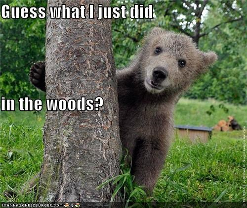 animals,bears,guess,I Can Has Cheezburger,nature,poop,sayings,trees,woods