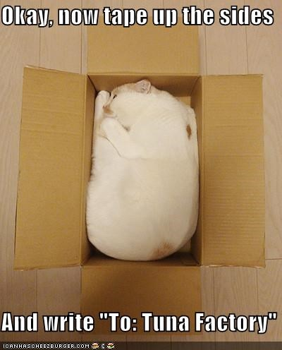 address box caption captioned cat factory fit now Okay shipping sides tape TO tuna write - 5206586624