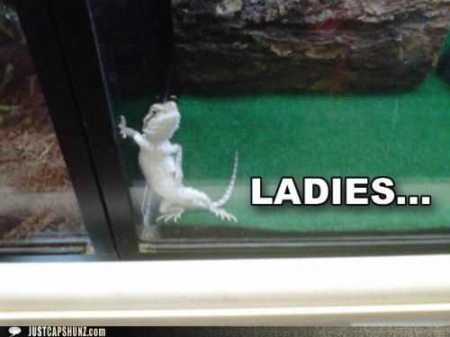 animals best of the week flirting Hall of Fame I Can Has Cheezburger ladies lizards posing sexy you like - 5206676480
