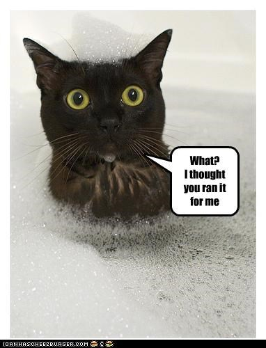 bath bubbles caption captioned cat confused excuse for me ran thought water what