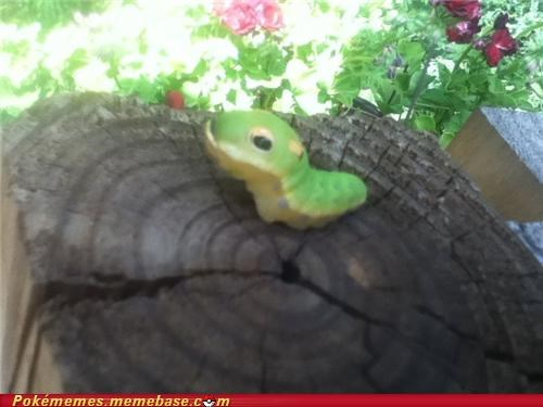 caterpie in your backyard IRL they exist - 5206987776