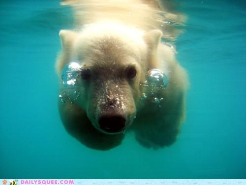 acting like animals bear bubbles diving excited friends friendship happy plans playing polar bear reunion reunited swimming underwater