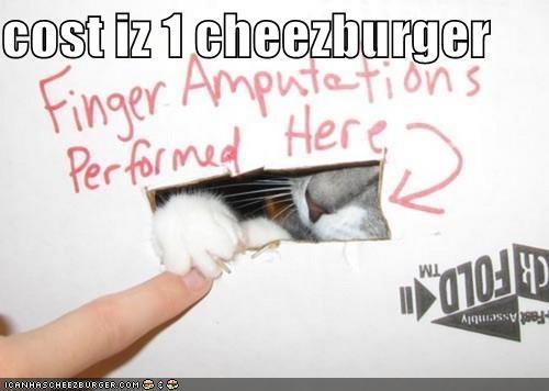 Cheezburger Image 5207299584
