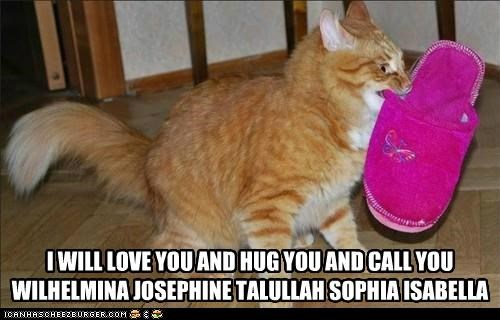 caption captioned cat excited friend holding hug lolwut looney tunes love name pet slipper tabby toy