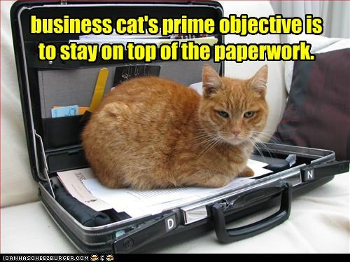 business cat's prime objective is to stay on top of the paperwork.