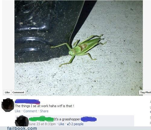 facepalm grasshopper Photo wtf - 5209207040
