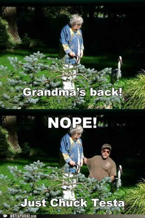 Chuck Testa,grandma,meme,photoshopped,taxidermy