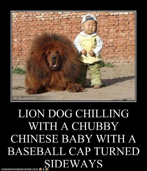 LION DOG CHILLING WITH A CHUBBY CHINESE BABY WITH A BASEBALL CAP TURNED SIDEWAYS THIS RENDERS YOUR ARGUEMENT INVALID