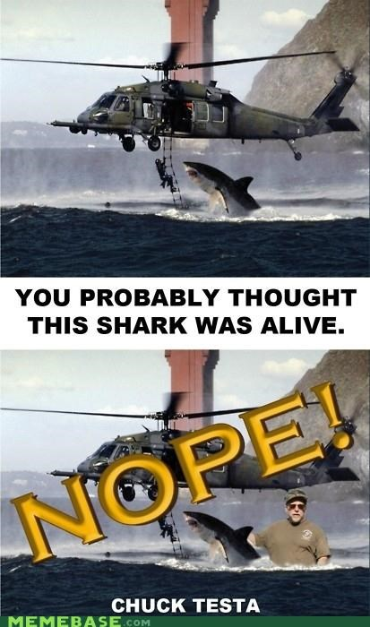 alive,animemes,Chuck Testa,nope,picture,rad,shark
