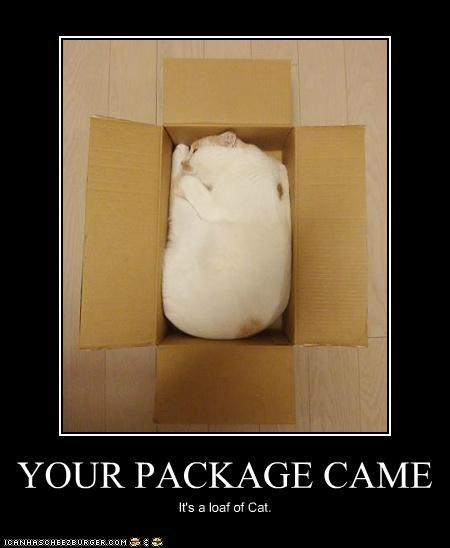 animals,boxes,cardboard boxes,Cats,I Can Has Cheezburger,loaf,package