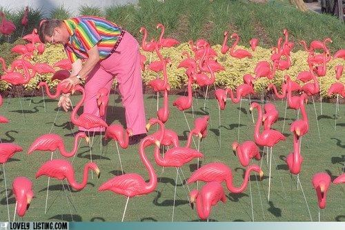 flamingos,yard