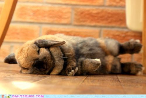 asleep bunny exclusive grace Hall of Fame happy bunday ideas rabbit separate sleep sleeping - 5209641472