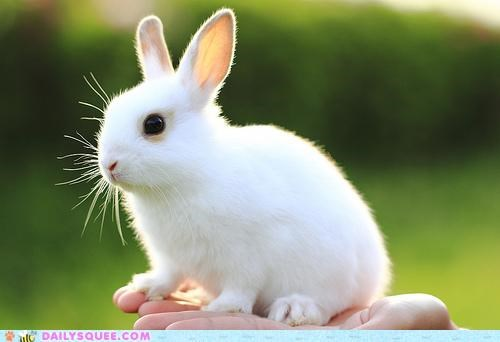 adorable bunny happy bunday presentation rabbit treasure