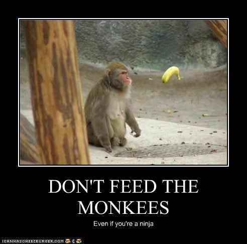 animals bananas feeding floating food I Can Has Cheezburger monkeys ninjas - 5209650176