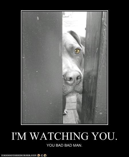 animals bad creepy i has a hotdog watching - 5209725440