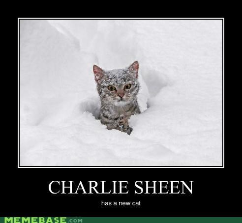 animemes,Blood,cat,Charlie Sheen,pet,roast,the white stuff,tiger