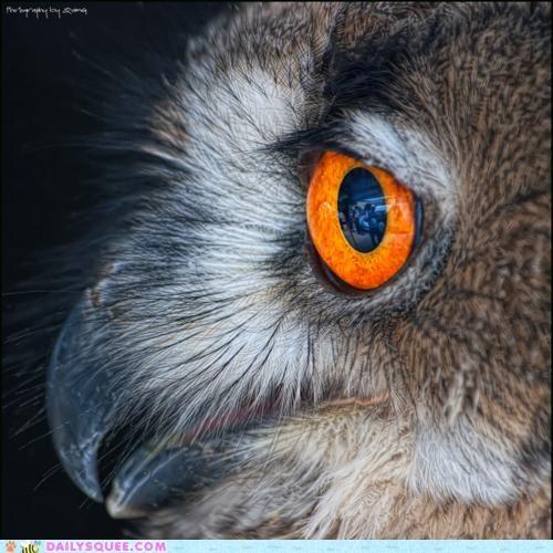 album beautiful eye Owl title - 5209909504