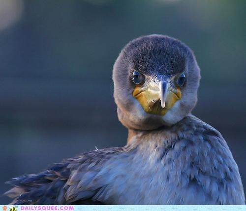 awake baby breakfast chick cormorant expression frown frowning grumpy sleeping in waking up - 5209961984