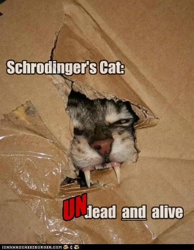 Cheezburger Image 5209969152