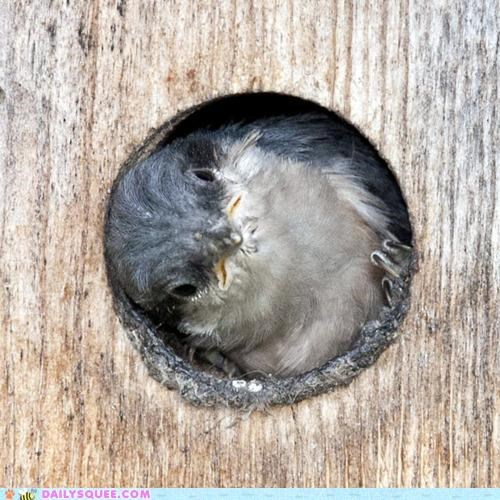 afraid baby bird birdhouse chick enclosed hole peeking pun reluctant safe whole wide world worldview - 5209987072
